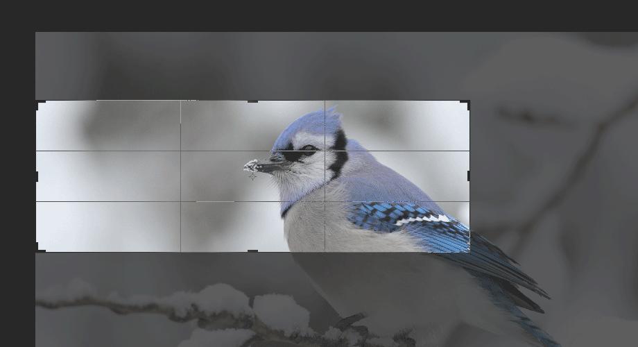 Photoshop Crop Tool selection